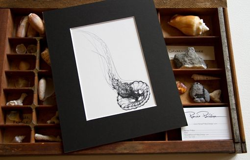 Custom Made Diving Sea Nettle Jellyfish, 8x10 Scientific Illustration For The Cabinet Of Curiosities Collection