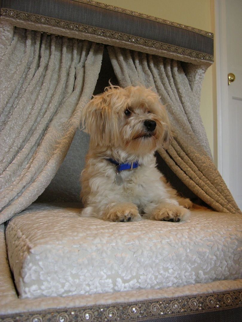 handmade upholstered dog bed by ve thoman custommadecom With upholstered dog bed