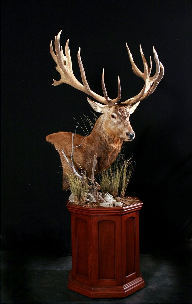 Hand Made Custom Taxidermy Pedestals By Summer Mountain