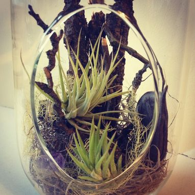 Custom Made Large Aerium - Hanging Tillandsia Air Plant Garden (Stitchprism)