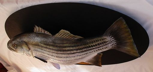 "Custom Made 36"" Hand-Carved Striped Bass"