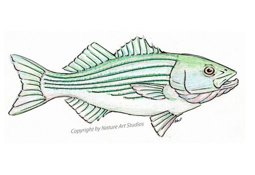 Custom Made Aceo With Original Striped Bass Watercolor Painting