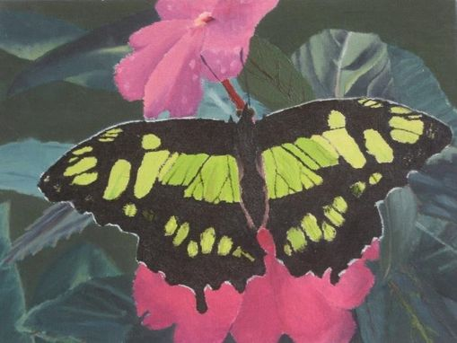 Custom Made Butterfly Oil Painting
