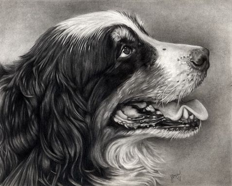 Custom Made Graphite/Pencil Pet Portraits