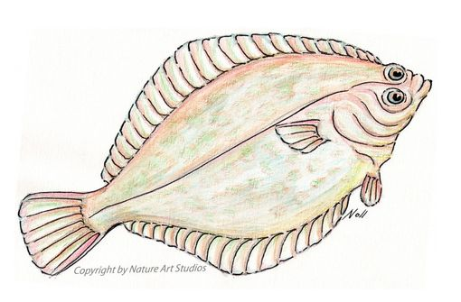 Custom Made Art Print With Original Flounder Fish Watercolor Painting