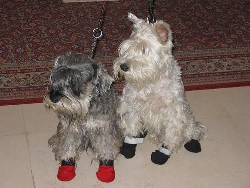 Custom Made Dog Coats And Dog Booties