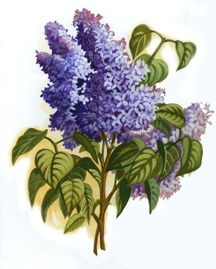 Custom Made Lilacs