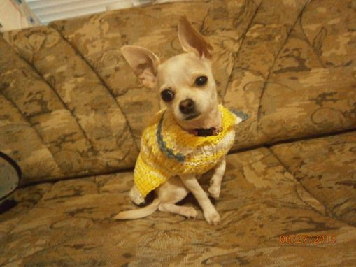 Custom Made Doggy Sweaters Teacup Chihuahua