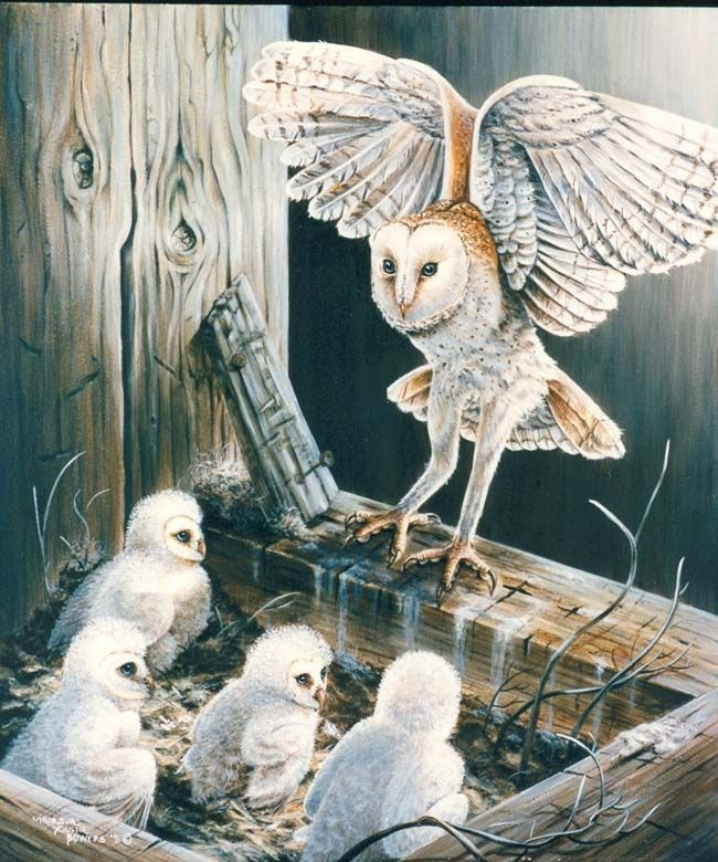 Hand Crafted Acrylic Painting Of Barn Owls By Zulim Bowers