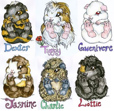 "Custom Made ""Squishy-Baby"" Animal Portraits"