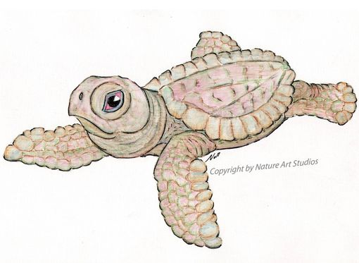 Custom Made Aceo With Original Young Sea Turtle Drawing