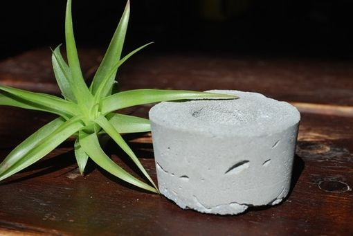 Custom Made Concrete Air Plant Holder - Air Plant - Concrete Pot