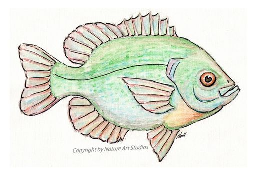 Custom Made Art Print With Original Bluegill Sunfish Watercolor Painting
