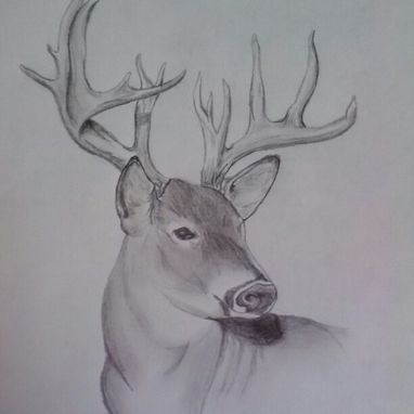Custom Made Deer Sketch