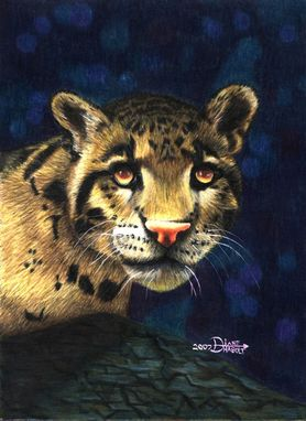 Custom Made Leopard Study / Colored Pencil