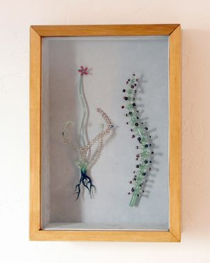 "Custom Made ""Drosera"" Shadow Box"