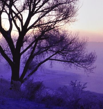 Custom Made Landscape Photography Print With Matte - Misty Tree - Sunrise In Flagstaff, Arizona - 8x10