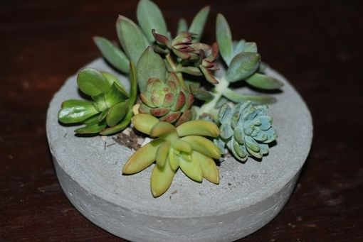 Custom Made Concrete Succulent Planter- Succulent Holder - Concrete Pot