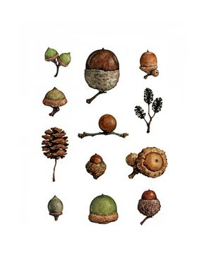 Custom Made Acorns Watercolor Painting