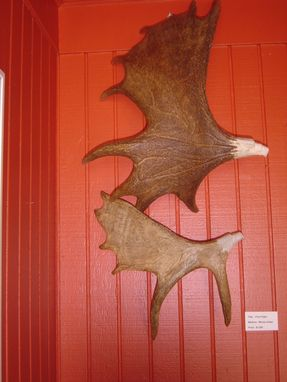 Custom Made Carved Moose Antlers Wall Hanging