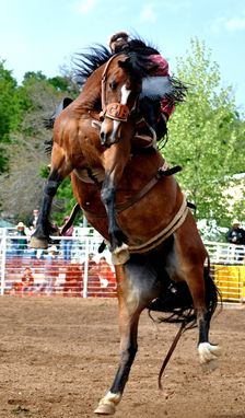 Custom Made Fine Art Photography Of A Flying Bronc