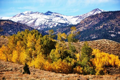 "Custom Made Nature Photography ""Eastern Sierra''"