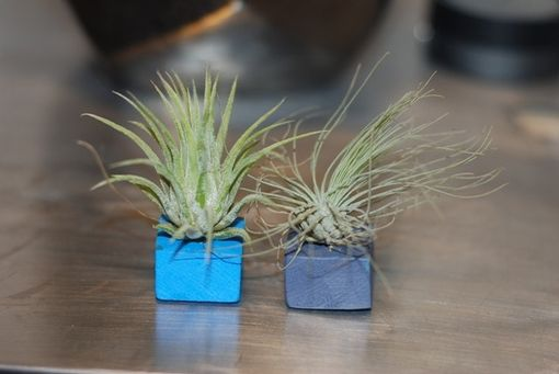 Custom Made Air Plant Magnets - Set Of 2 - Pair Of Blue Magnets With Air Plant - Wood Magnet