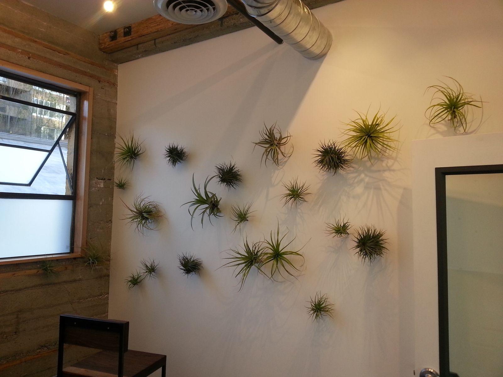 custom air plant installation by tres piedras design. Black Bedroom Furniture Sets. Home Design Ideas