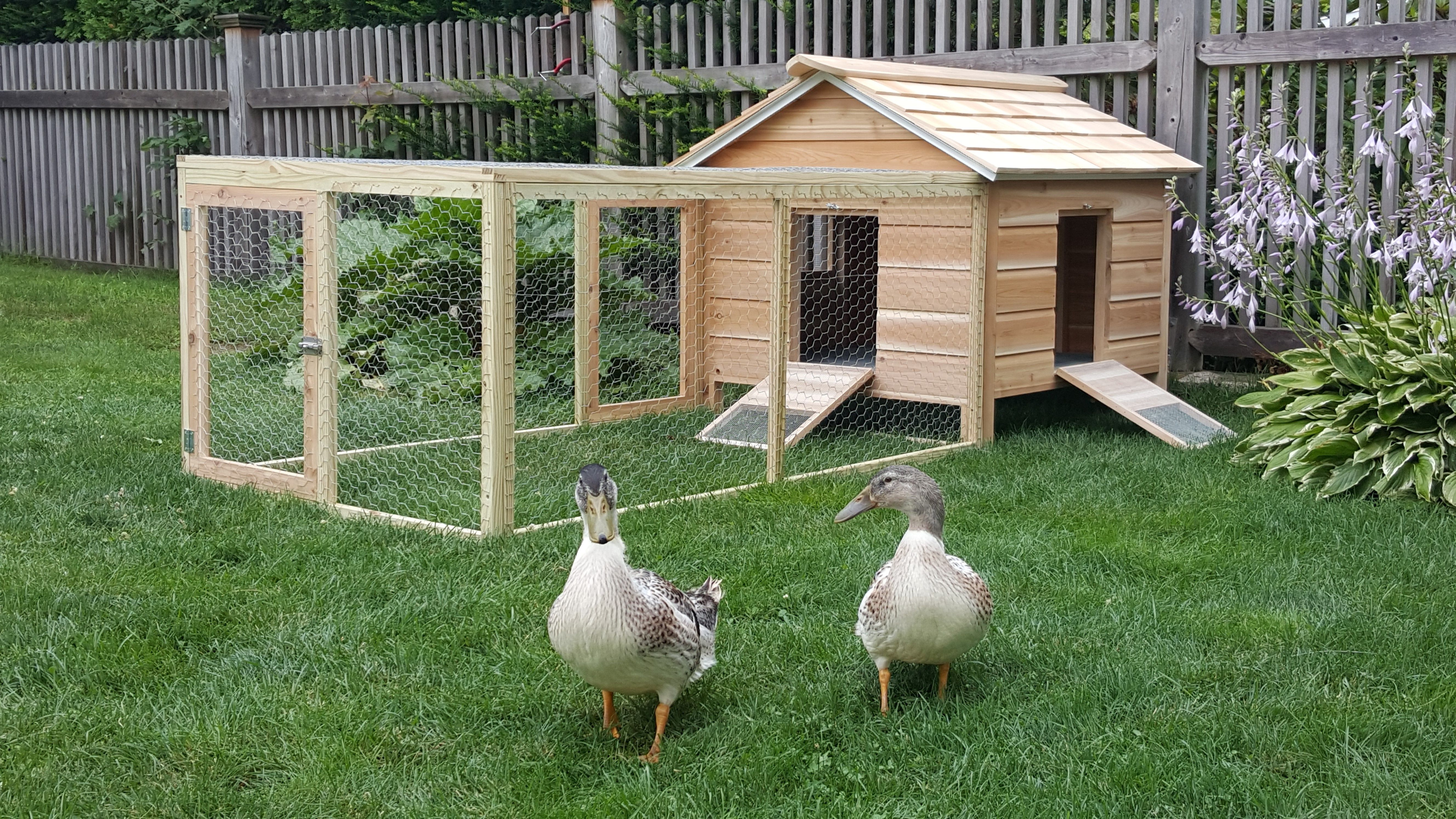com coops wood natural animal at rabbit coop hutch natura hutches products lowes pl trixie chicken shop pet care