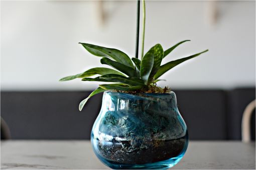 Custom Made Recycled Hand-Blown Glass Orchid Planter