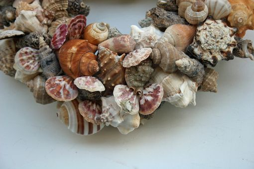 Custom Made Sea Shell Decor