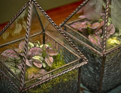 "Custom Made 4"" X 4""X 8"" Terrarium / Display Case"
