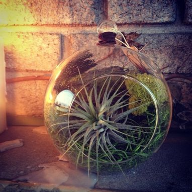 Custom Made Small Aerium - Hanging Air Plant Garden (Stitchprism)