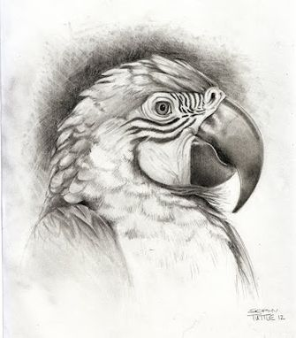 Custom Made Bird Drawings