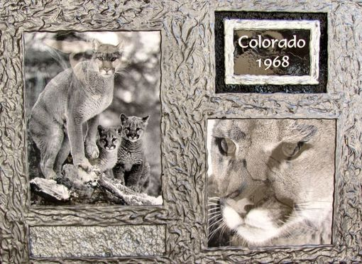 Custom Made Mountain Lions - Dual Wildlife Photo Frame