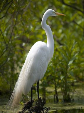Custom Made Great Egret