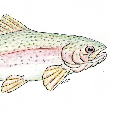 Custom Made Hand-Painted Rainbow Trout Card In Watercolor