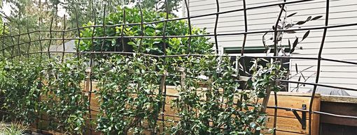 Custom Made Organic Trellis