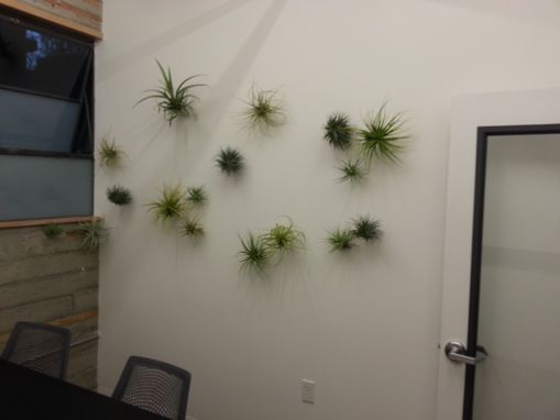 Custom Made Air Plant Installation