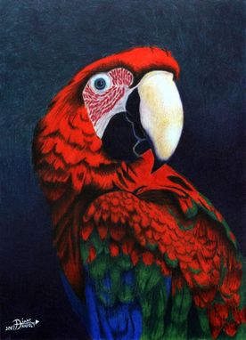 Custom Made Parrot Study / Colored Pencil