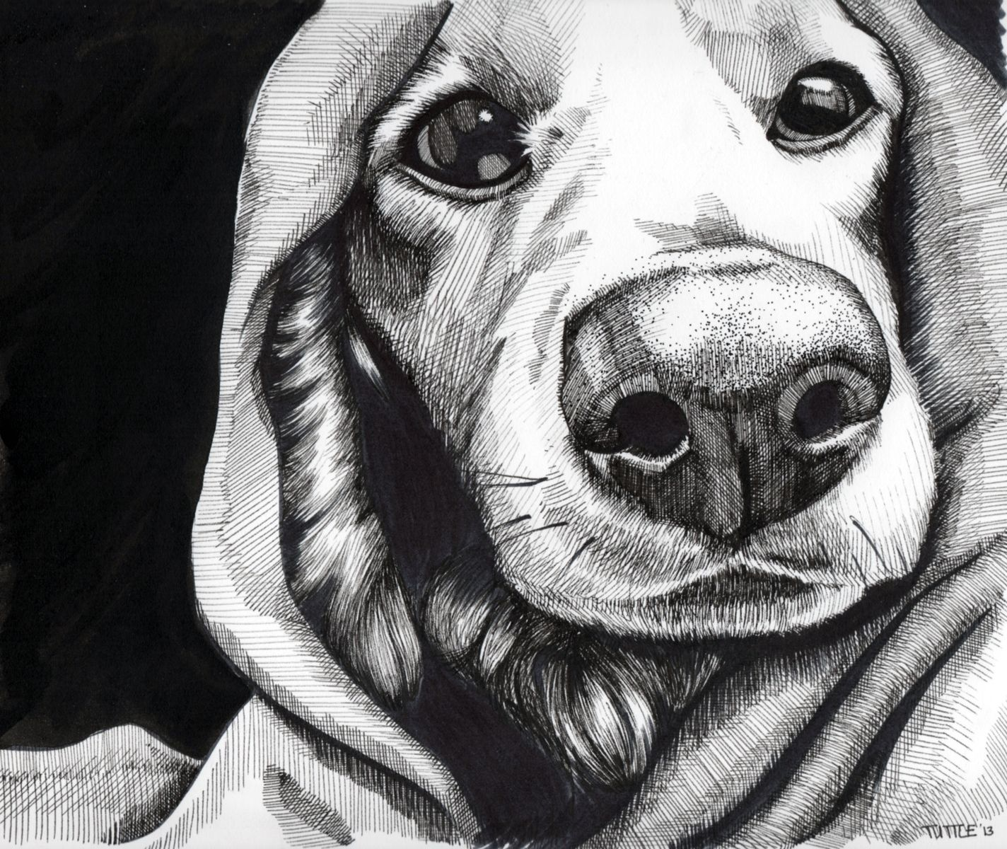Hand crafted pet portraits black and white by sophy tuttle art