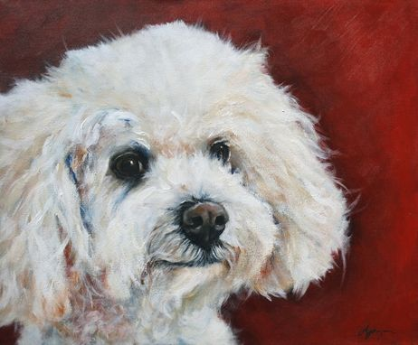 Custom Made Bichon Poo Portrait