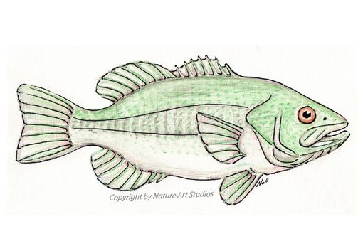 Custom Made Art Print With Original Largemouth Bass Watercolor Painting