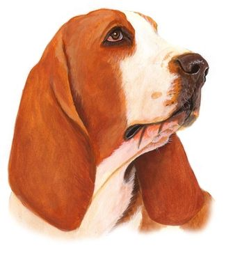 Custom Made Basset Hound