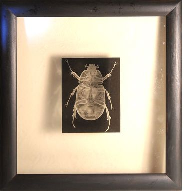 Custom Made Xrays Of Insects And Other Animals