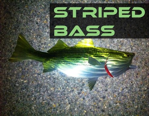 Custom Made Striped Bass