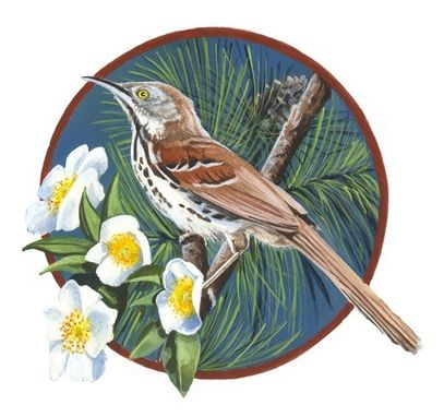 Custom Made Brown Thrasher