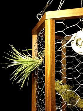 Custom Made Teak Air Plant Display Cage