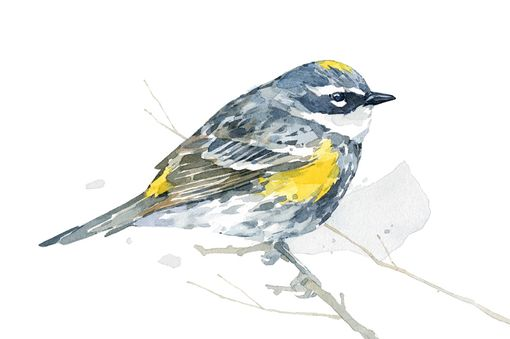 Custom Made Original Bird Watercolor Painting