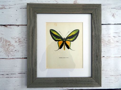 Custom Made Antique Butterfly Lithograph Print Framed In Barn Board